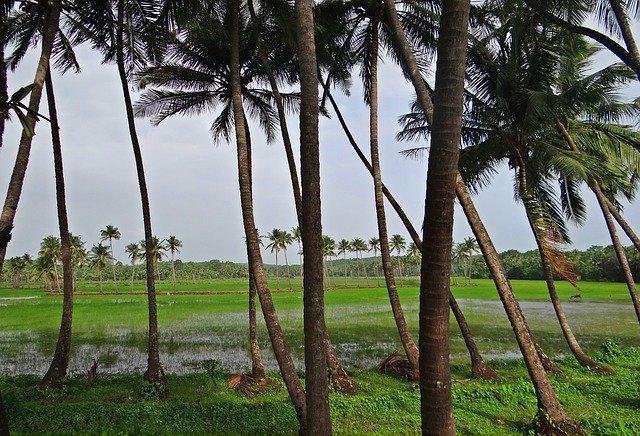 kokosovníky