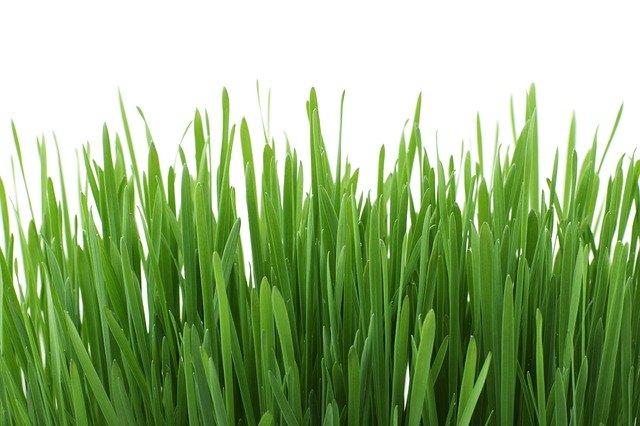 rostoucí tráva